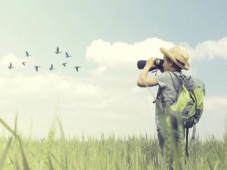birdwatching come si pratica